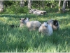 lammas2.jpg